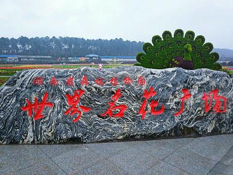 湖南省森林植物园旅游景点图片