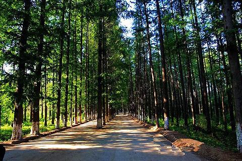 日照海滨国家森林公园旅游景点攻略图