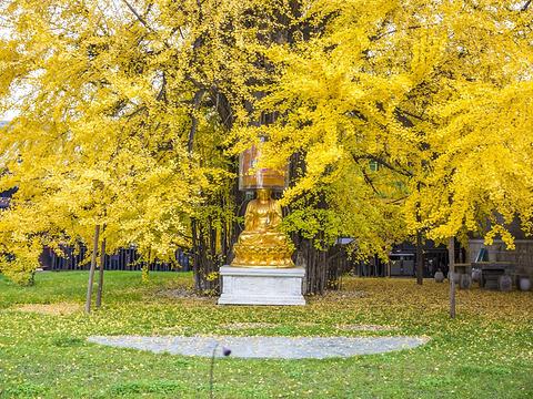 古观音禅寺旅游景点图片