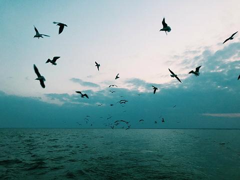 哈素海旅游景点图片