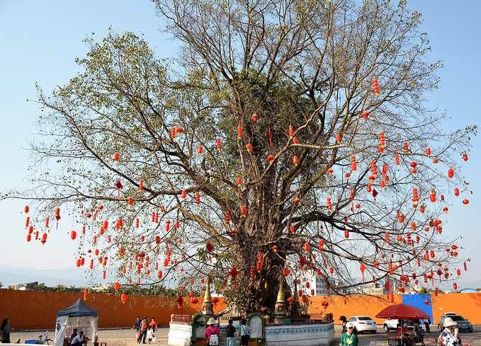 树包塔图片