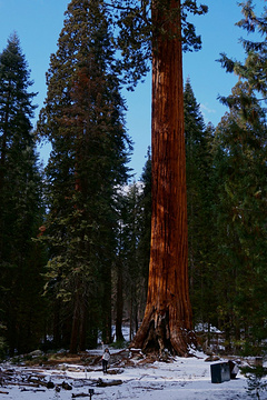 巨杉国家公园旅游景点攻略图