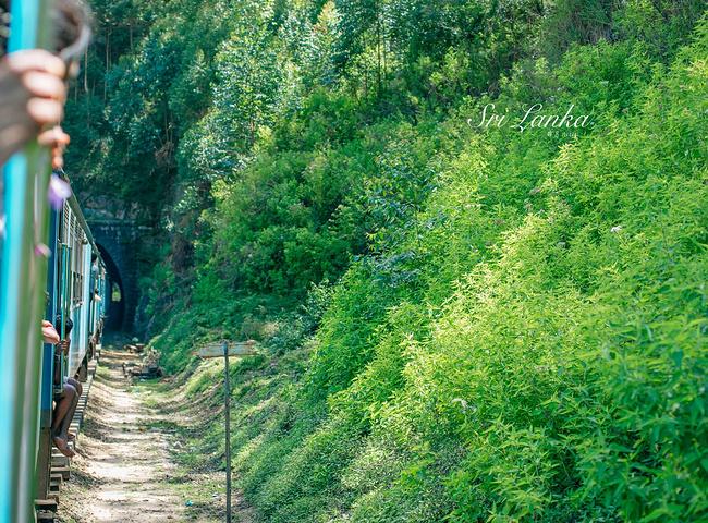 """""""斯里兰卡的火车是一种极其古老的蒸汽小火车,行走速度很慢,非常适合旅行观光。,他们对中国人充满着感激_茶园火车""""的评论图片"""