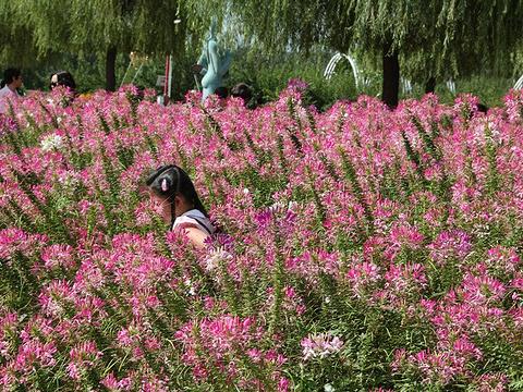 长春农博园旅游景点图片