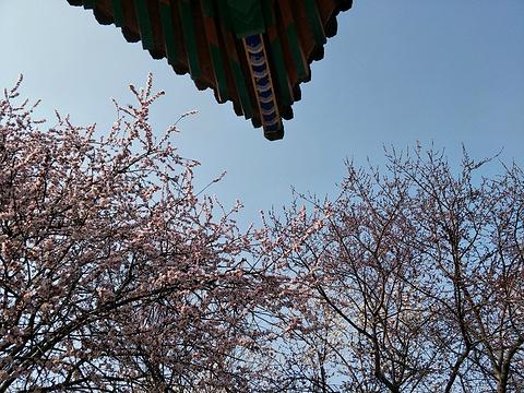 桃花堤公园旅游景点图片