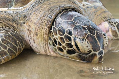 海龟岛旅游景点攻略图
