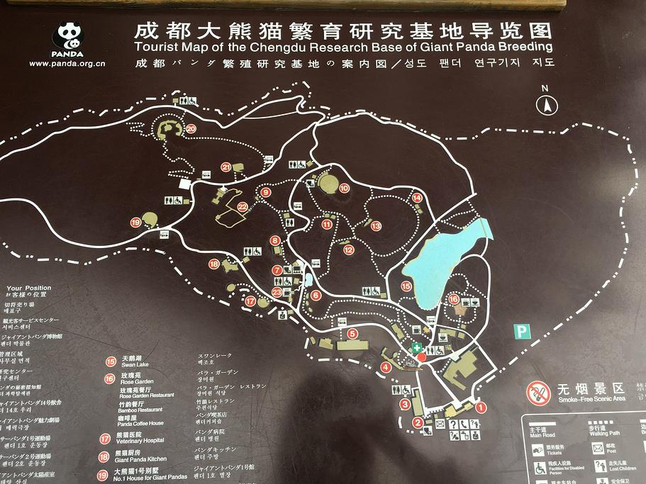 大熊猫繁育研究基地旅游导图
