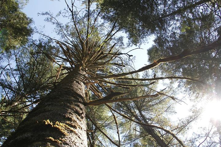 """""""是一处保存很好的原始森林""""大亮子河国家森林""""公园,由佳木斯市出发在朋友的盛情之一,我们一行四人..._大亮子河国家森林公园""""的评论图片"""