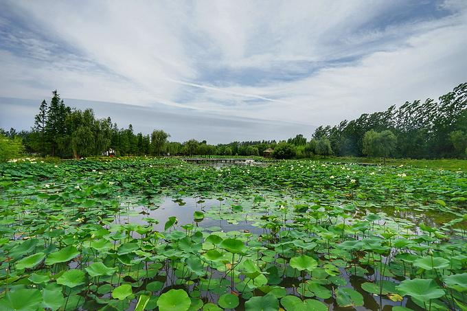 日照海滨国家森林公园图片