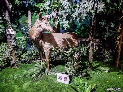 吉林省自然博物馆旅游景点图片
