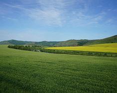 呼伦贝尔大草原,是牛羊的天堂,是草的家乡……