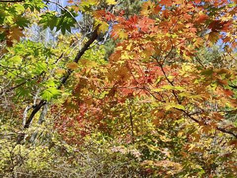 虎塘沟旅游景点图片
