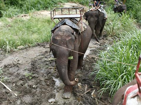 湄沙大象营旅游景点图片
