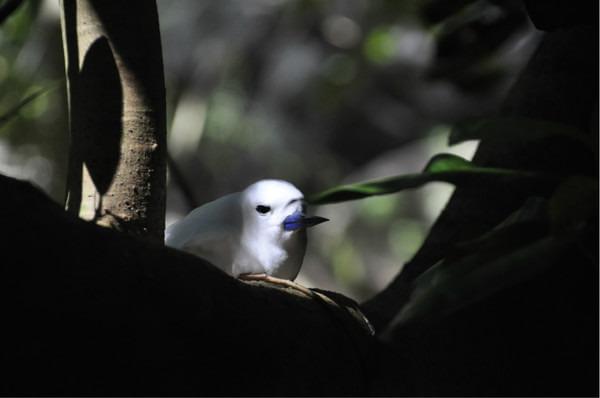 库金岛图片