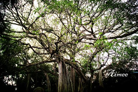 勐巴娜西大花园旅游景点攻略图