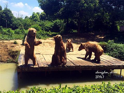 淹城野生动物世界旅游景点图片