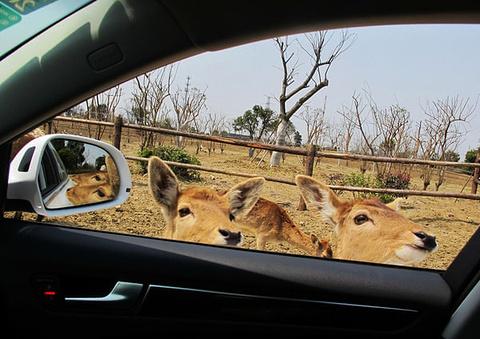 淹城野生动物园旅游景点攻略图