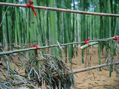 肖甸湖森林公园旅游景点图片