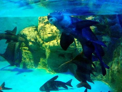 曲江海洋极地公园旅游景点攻略图