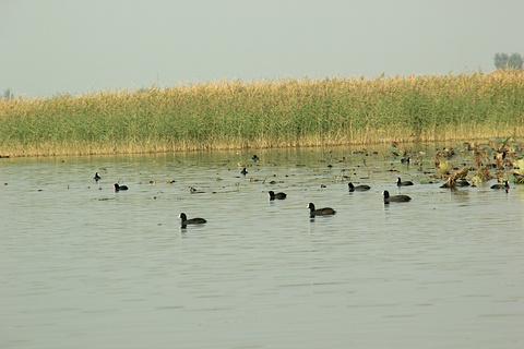 衡水湖的图片