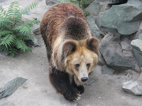 天津动物园旅游景点图片