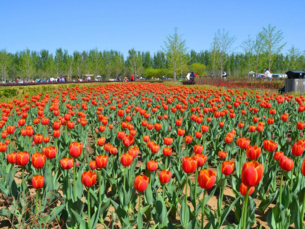 带娃去看花--北京国际鲜花港一日游