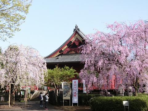 上野公园的图片