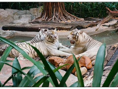 白虎自助餐厅旅游景点图片
