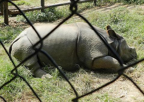 帕坦动物园