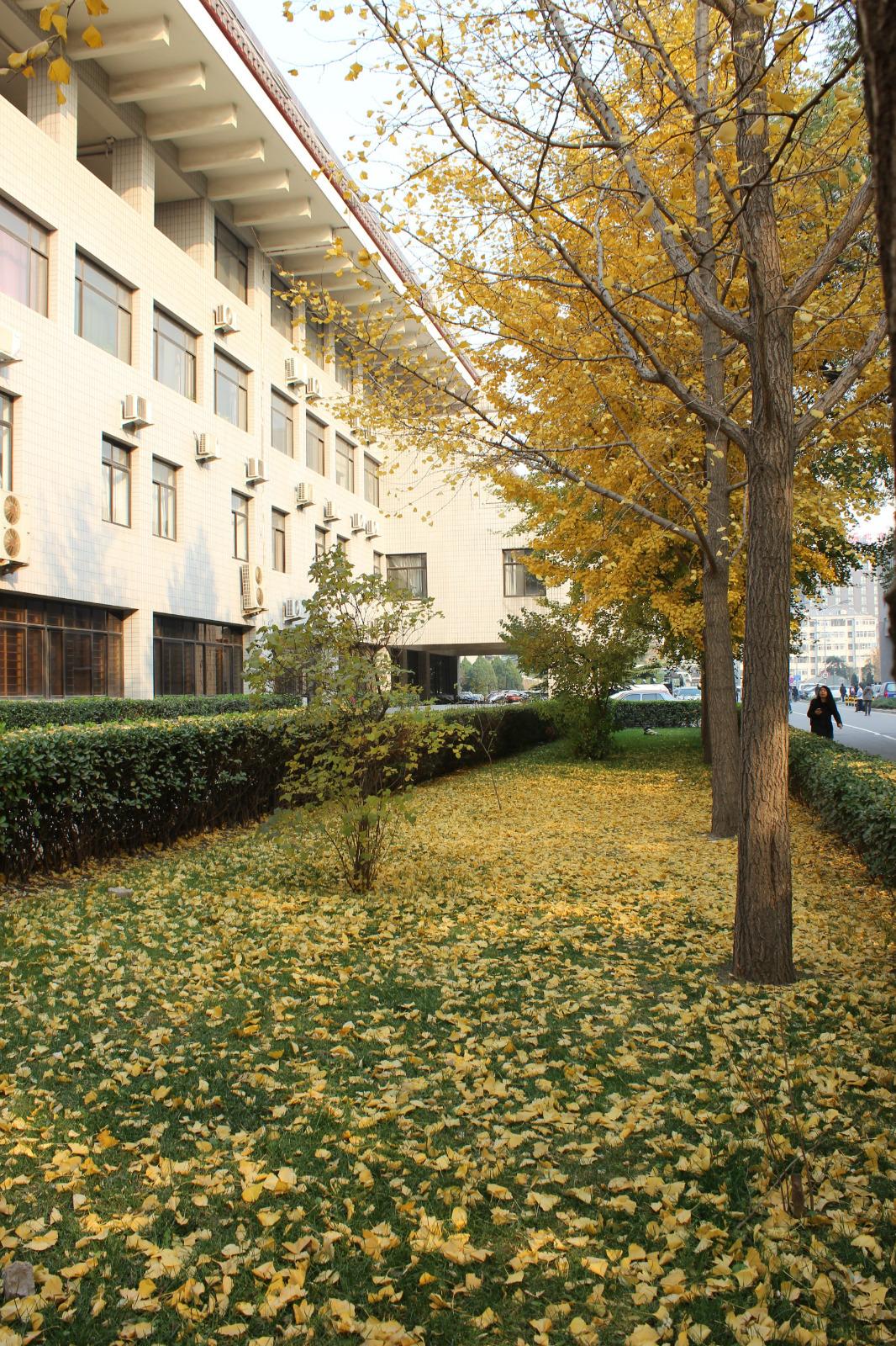 北京大学旅游景点29--勺园_网上幽魂_新浪博客