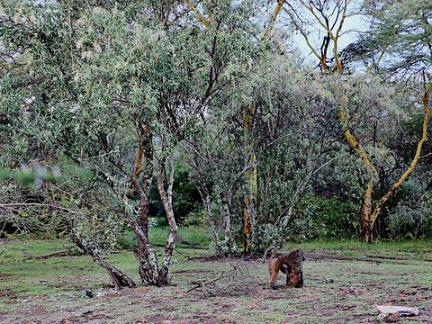纳库鲁湖旅游景点图片