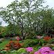 阿布哈兹花园