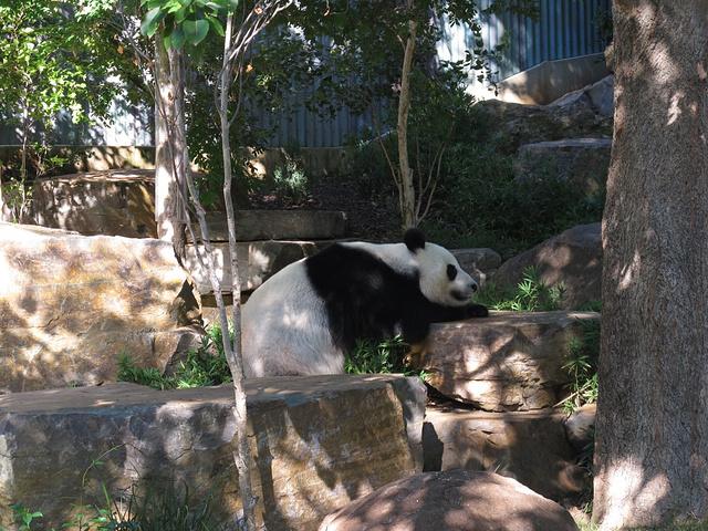 """""""那时候动物们都比较活跃_阿德莱德动物园""""的评论图片"""