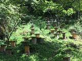 神农坛旅游景点攻略图片