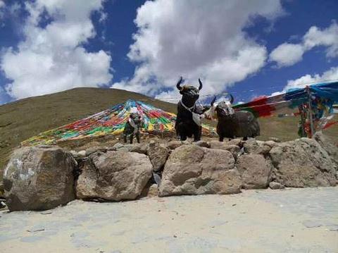 米拉山旅游景点攻略图