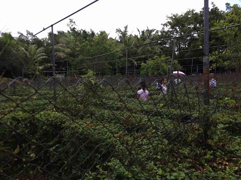 茂名森林公园旅游景点图片