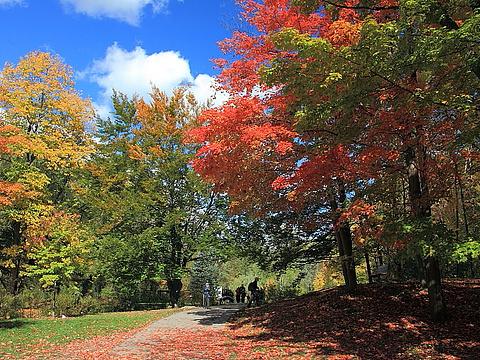 爱德华七世公园旅游景点图片