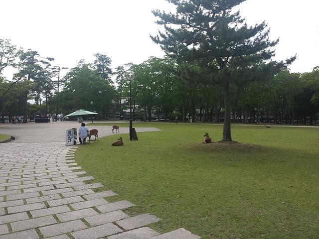 """""""这里最大的玩点就是看各种各样的鹿,还有古老的寺院_奈良公园""""的评论图片"""