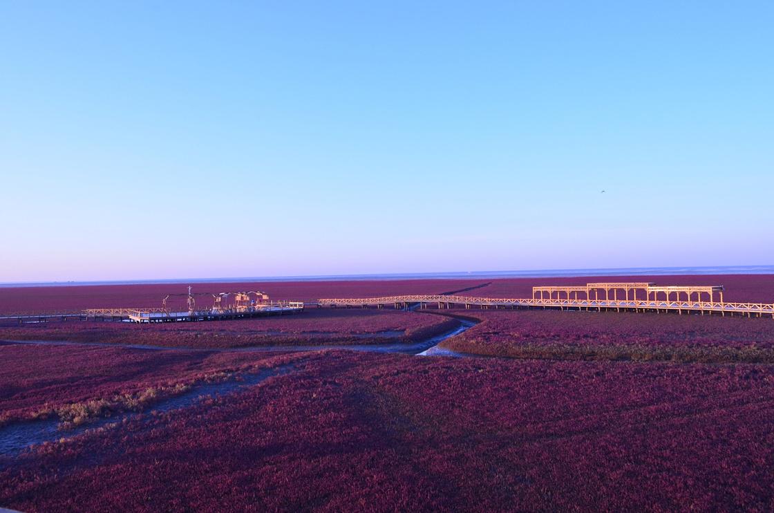 盘锦红海滩--二界沟&三角洲