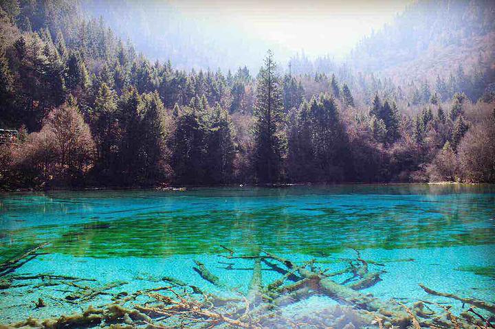 """""""3、诺日朗瀑布:必去的景点,中国最宽的瀑布。如果来到九寨沟建议两天时间游玩_九寨沟风景区""""的评论图片"""