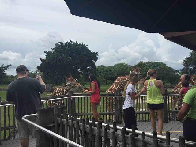 """""""门票成人17.95刀,首先推荐喂长颈鹿,开放时间11点到下午4点,建议上午去,比较活跃_迈阿密动物园""""的评论图片"""