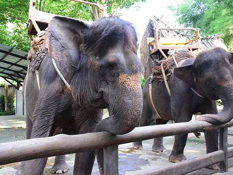 巴厘动物园旅游景点图片