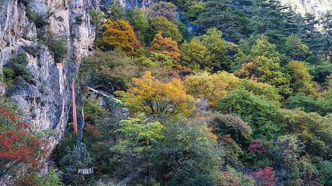 原始森林的图片