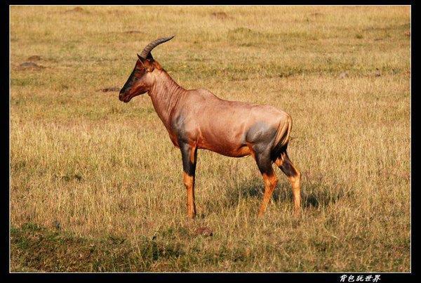 塞伦盖提国家公园图片