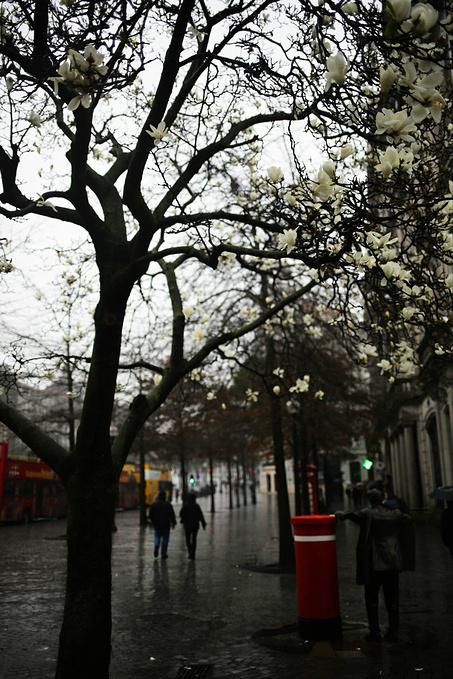 雨中的青花瓷图片