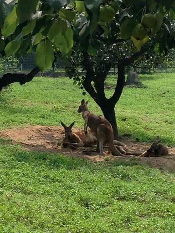 """""""整个园区都打扫得很干净,周围绿化也做得不错,在园子里面参观也会特别好心情_北京野生动物园""""的评论图片"""