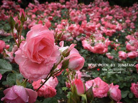 玫瑰园旅游景点图片