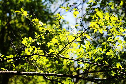金龙山国家森林公园的图片