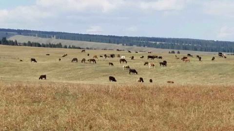 加什哈拉盖牧场旅游景点攻略图