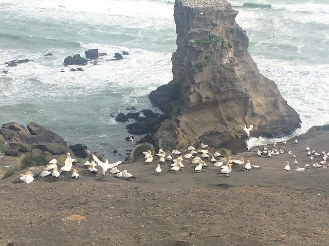 """""""第一次看到如此数量的鸟聚集在一起,震撼到..._穆里怀塘鹅栖息地""""的评论图片"""